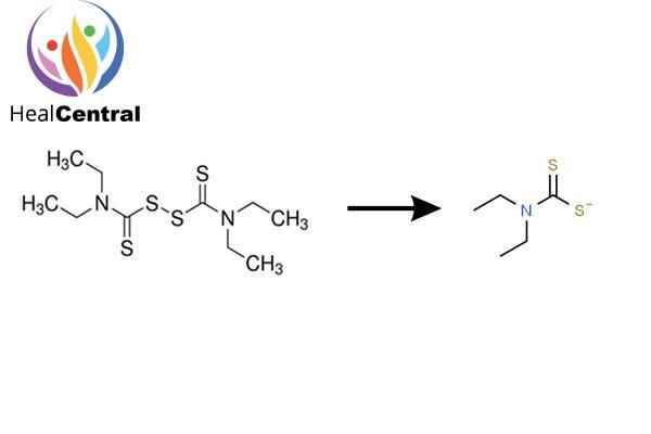 Chuyển hóa disulfiram thành diethyldithiocarbamate