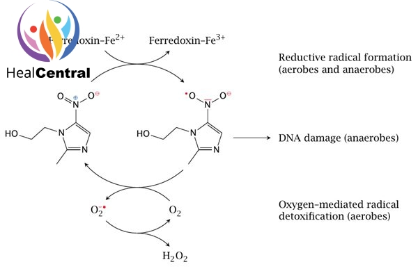 Mô tả ngắn gọn cơ chế tác dụng của metronidazole.
