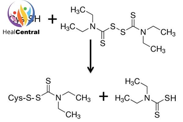 Disulfiram liên kết với cystein