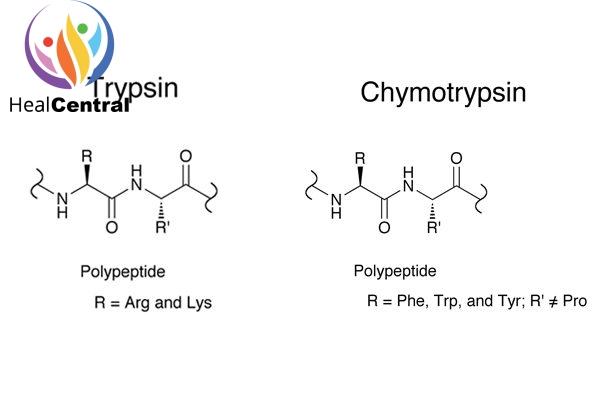 So sánh Trypsin và Chymotrypsin