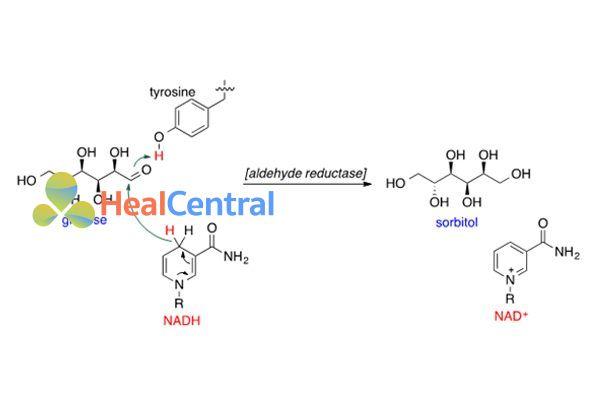 Quá trình khử glucose thành sorbitol nhờ aldehyde ruductase và NADH.
