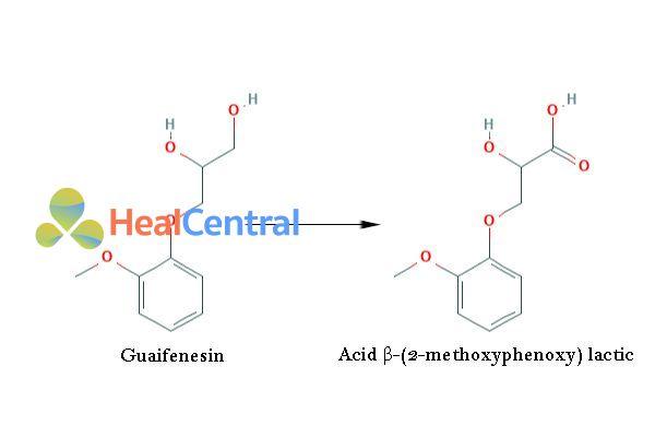 Chuyển hóa Guaifenesin