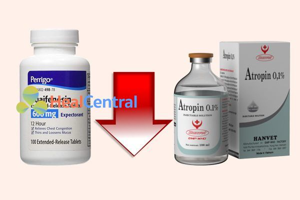 Tương tác thuốcguaifenesin và atropin